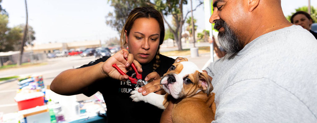 Outside at a rescue event, a woman trims the nails of a small bulldog puppy held by a smiling man.