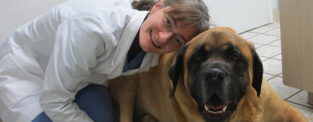 A smiling veterinarian hugging a large mastiff dog