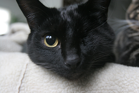 A black cat with one yellow eye looks at the viewer.